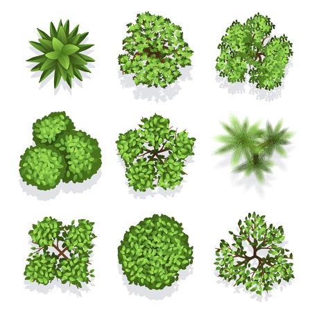 Vista superior de diferentes plantas y árboles. Conjunto de vectores de árboles para diseño arquitectónico o paisajístico. Ilustración de árboles verdes para jardín Ilustración de vector