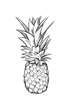 Hand drawn pineapple. Ananas fruit sketch black line. Vector illustration