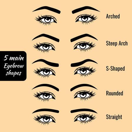 eyebrow: 5 basic eyebrow shape types vector illustration. Fashion female brow