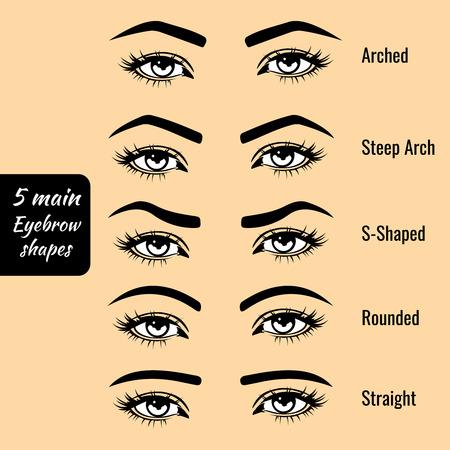 brow: 5 basic eyebrow shape types vector illustration. Fashion female brow