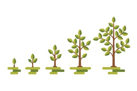 diagrama de arbol: Árbol verde con el diagrama de crecimiento de las hojas. desarrollo del ciclo de negocios, ilustración vectorial Vectores