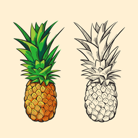 Outline pineapple and color cartoon pineapple with green leaves vector illustration