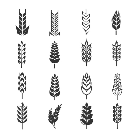 Wheat ears vector icons. Natural harvest rye and organic food illustration Vetores