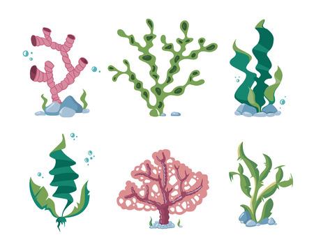 kelp: Underwater seaweeds, aqua kelp, ocean and aquarium plants vector set. Aquatic nature kelp life illustration