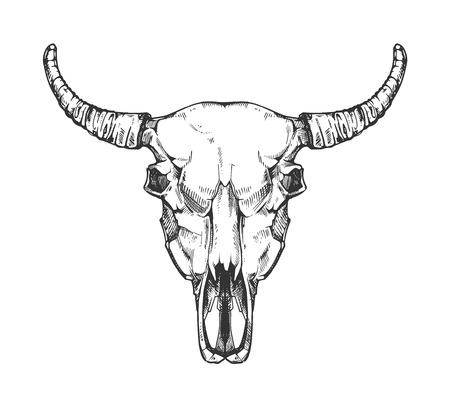 Vintage buffalo skull vector sketch. Bull animal head bones in hand drawn style. Cow head with horn illustration Vettoriali