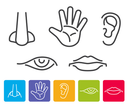 human touch: Five human senses smell, sight, hearing, taste, touch vector. Icons human sense, illustration of five senses