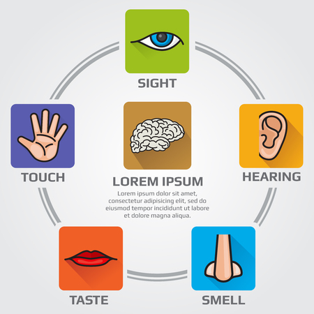 hear: Five human senses smell, sight, hearing, taste, sensory. Vector infographics sence with nose, hand, mouth, eye, ear icons. Illustration of brain and himan senses