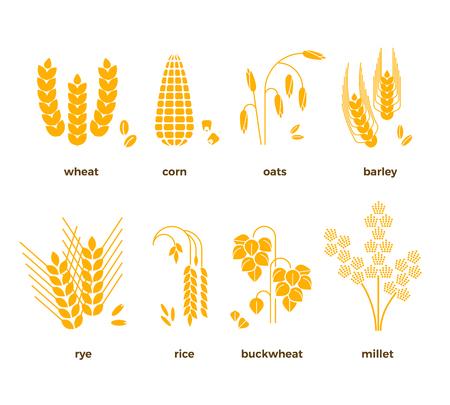 Ziarna zbóż ikon wektorowych. Ryż i pszenica, kukurydza, owies, żyto i jęczmień. Zestaw zbiorów zbóż, ilustracja ziaren rolnictwa Ilustracje wektorowe