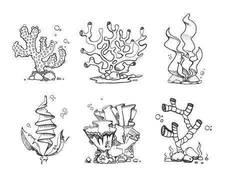 Vintage corals and seaweeds in hand drawn, doodle, sketch style vector set. Seaweeds plant marine, illustration of frame corals