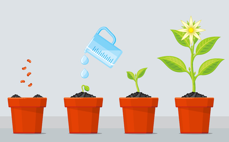 Planta que crece etapas. infografía línea de tiempo de proceso de plantación de árboles. flor de la planta verde, gráfico plántulas de plantas de jardinería. ilustración vectorial