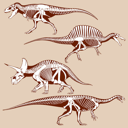 gigantic: Gigantic dinosaurus silhouettes with skeletons vector set. Exhibit of dinosaur skeletons for museum, illustration of ancient predator dinosaur Illustration