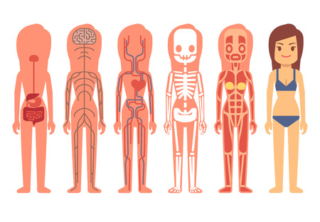 Medical woman body anatomy vector. Skeleton, muscular, circulatory, nervous and digestive systems. Human life support system of set illustration, anatomy of human body