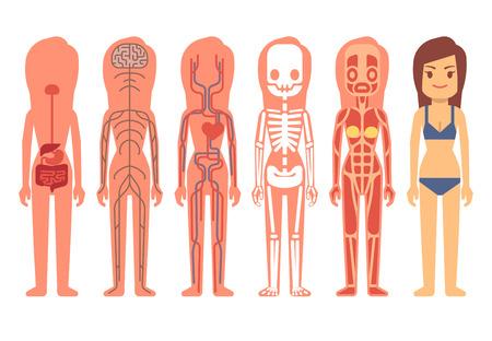 Medische vrouw lichaamsanatomie vector. Skelet, gespierd, de bloedsomloop, het zenuwstelsel en het spijsverteringsstelsel. Het menselijk leven support systeem van de set illustratie, anatomie van het menselijk lichaam
