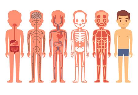Medizinische Frau Körper Anatomie Vektor. Skelett, Muskel ...