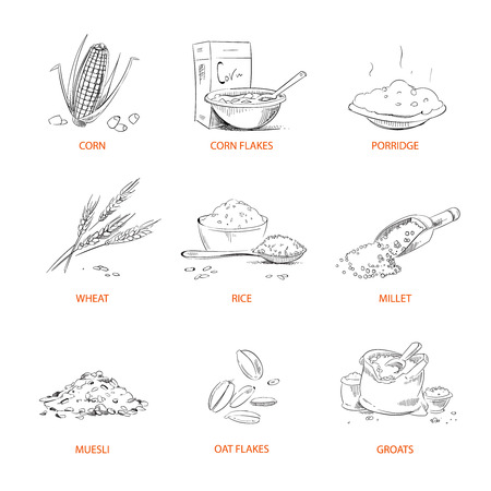 Doodle cereals groats, porridge, muesli, cornflakes, oat and rye, wheat and barley, millet or buckwheat, rice, corn. Set of cereals sketch.