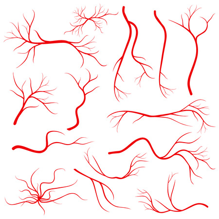 vessels: Human eye veins, vessel, blood arteries isolated on white vector. Set of blood veins, image of health red veins illustration Stock Photo
