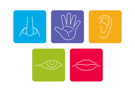 Five senses vector icons set isolated white. Smell and see, feel and hear illustration