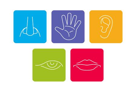Pięć zmysłów wektora ikony zestaw izolowane białe. Zapach i zobacz, odczuwaj i słyszysz ilustrację Ilustracje wektorowe