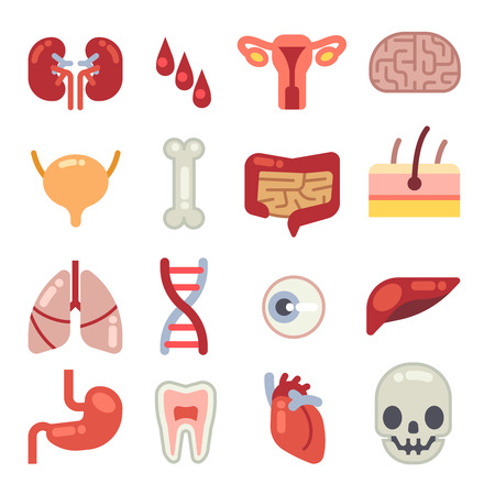 Human Internal Organs Flat Vector Icons Set Of Vital Organs