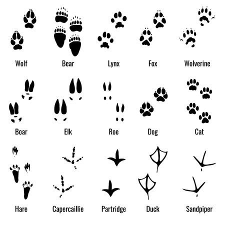 Les animaux sauvages, les reptiles et l'empreinte des oiseaux, la pate des animaux imprime un ensemble de vecteurs. Empreintes de variété d'animaux, illustration des empreintes de silhouette noire