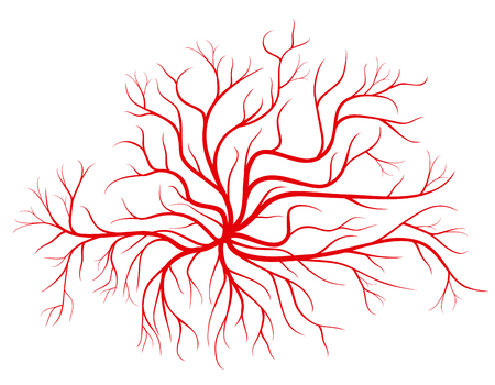 Human blood veins, red vessels vector illustration. Blood vessel and human cardiovascular red silhouette vessel Stock Photo