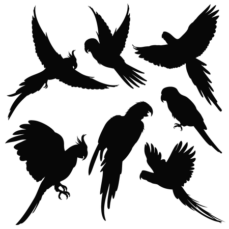 Vector parrots, amazon jungle birds silhouettes isolated on white. Black silhouette parrots, illustration of exotic bird parrot Ilustração