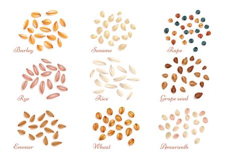Realistische graankorrels en oliehoudende zadenvector. Set van graanoogst, illustratie van gezonde granen rogge rijst en tarwe Stock Illustratie