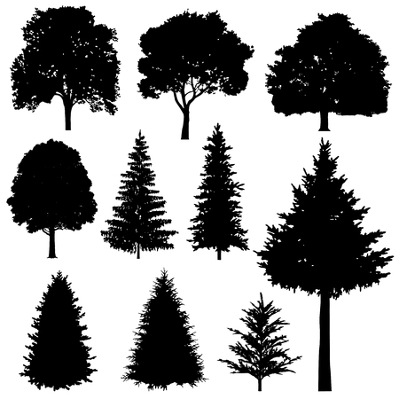 evergreen tree: Forest coniferous and deciduous fir trees vector silhouettes set. Evergreen tree plant, illustration of silhouette wood tree