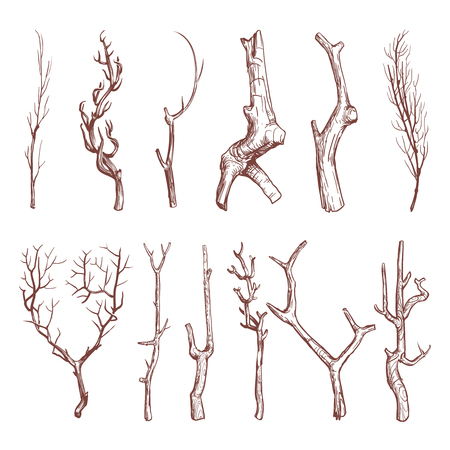 bough: Sketch wood twigs, broken tree branches vector set. Botany wood twig, collection of sketch dry twig limb illustration