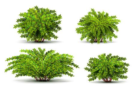 Arbusti, cespugli isometrici 3d isolati sull'insieme bianco di vettore. Illustrazione verde arbusti Vettoriali