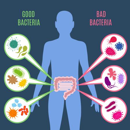 Concepto de vector de salud intestino de flora intestinal con bacterias y los iconos de probióticos, Ilustración de microorganismos buenos y malos de flora humana