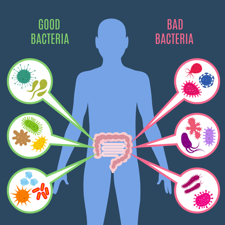 Intestinal flora gut health vector concept with bacteria and probiotics icons, Human flora good and bad microorganism illustration