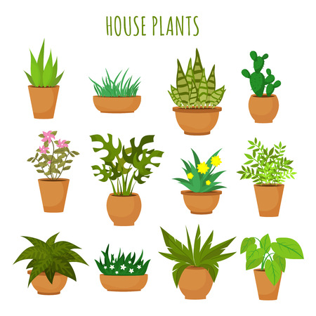 Indoor house green plants and flowers isolated on white vector set. Green plants in pots, illustration of green garden flower plant