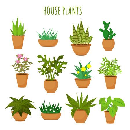 Grüne Pflanzen und Blumen des Innenhauses lokalisiert auf weißem Vektorsatz. Grünpflanzen in den Töpfen, Illustration der grünen Gartenblumenanlage