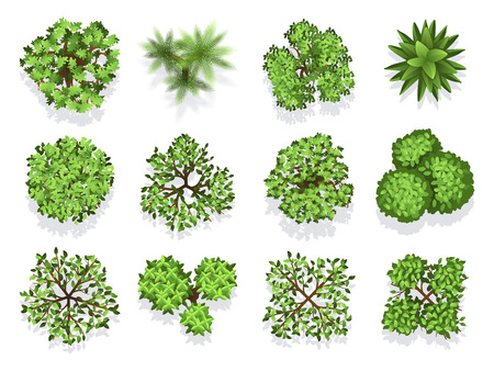 Top view tree collection - green foliage isolated on white background. Green plant top, nature tree collection illustration vector Illustration