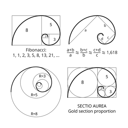 Golden fibonacci ratio spirals. Gold section proportion vector visualization