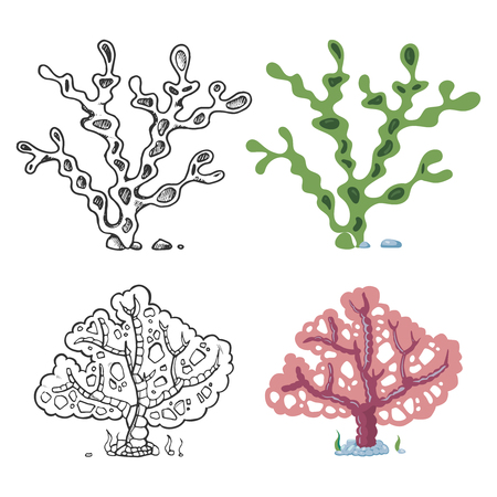Seaweeds coloring page with bright sample - coral and underwater plant isolated on white background. Vector illustration