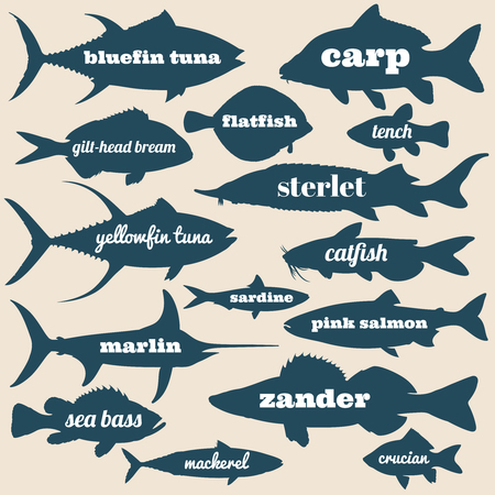 Ocean fish vector silhouettes with names isolated on white background. Illustration of sea and river fish 일러스트
