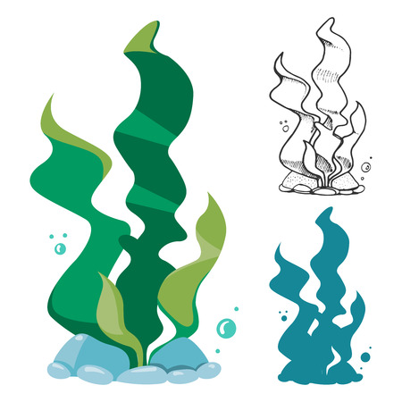 Doodle, silhouette and cartoon seaweeds set. Underwater plants, vector illustration