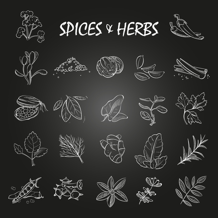 Sketch spices and herbs collection on chalkboard