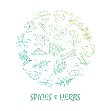 Hand drawn spice and herbs bright Vectores