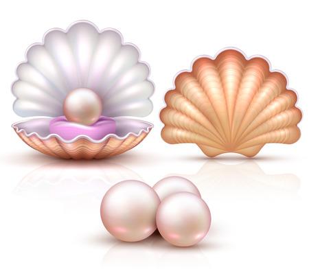 Geopende en gesloten zeeschelpen met geïsoleerde parels. Schelpdieren vector illustratie voor schoonheid en luxe concept Stockfoto - 97684596
