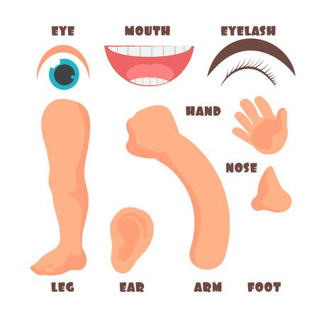 Baby body parts with English label cartoon illustration. Illustration