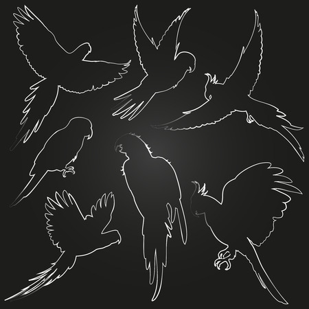 White parrots, amazon jungle birds line silhouettes on blackboard. Vector illustration
