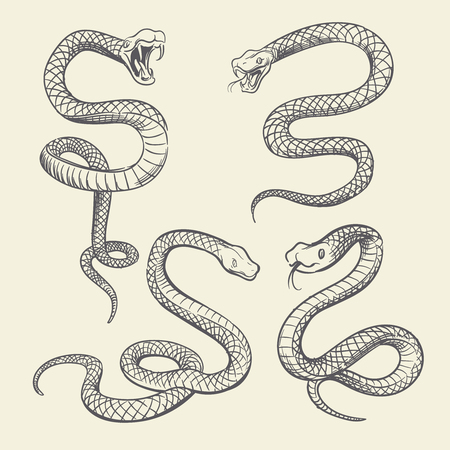 Hand drawing snake set. Wildlife snakes tattoo vector design isolated Illustration
