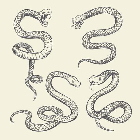 Set di serpenti di disegno a mano. Serpenti della fauna selvatica tatuaggio disegno vettoriale isolato
