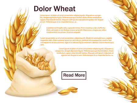 Realistic wheat, grains and ears isolated on white background,