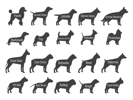 Black dog breeds vector silhouettes isolated on white background