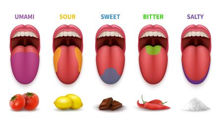 Zonas gustativas básicas de la lengua humana. Mapa de Smack en la boca diagrama vectorial dulce, salado, agrio, amargo y umami aislado sobre fondo blanco