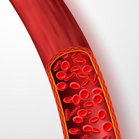 Ludzkie naczynie krwionośne z czerwonymi krwinkami. Żyły krwi z makro erytrocytów w osoczu na białym tle ilustracji wektorowych